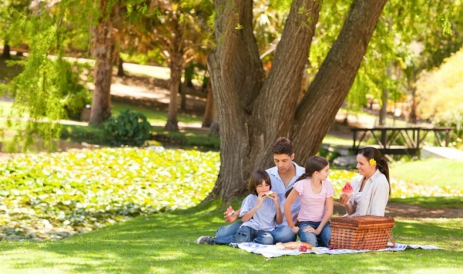 Family sitting under a large tree having a picnic